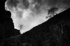 Cheddar trees © Austen O'Hanlon 2021